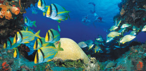 Cancun_Tour_Snorkel_Cozumel