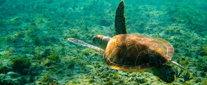 Cancun_Tours_Tortugas