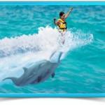bi_dolphin_royal_swim