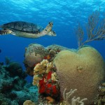cozumel-buceo1a