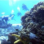 scuba_diving_cozumel_1