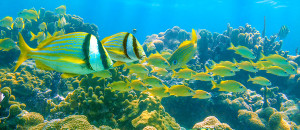 Arrecife Inah