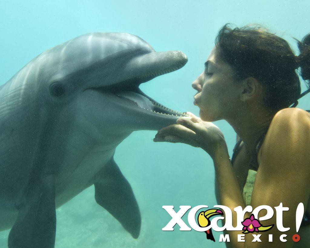 O parque Xcaret tem duas áreas para nado com golfinhos com atividades básicas até as mais completas